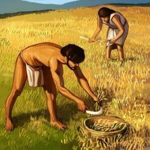 15_Barley Seeds