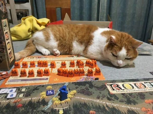 CAT ROOT