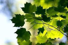 feuilles-stegmaier