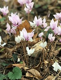 fleurs-rando