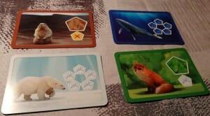 Exemples de carte animaux