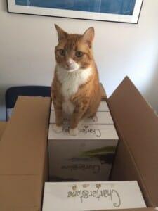 charterstone-ludovox-jeu-de-societe-happy-cat