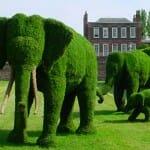 Topiary-Jeu de société-Exemples-Ludovox (2)