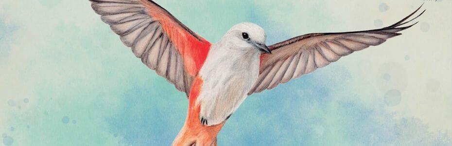 Banniere wingspan 930p300