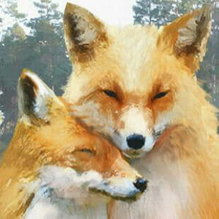 Le Renard des Bois Duo  – L'heure n'est plus à l'affrontement mais à la coopération !